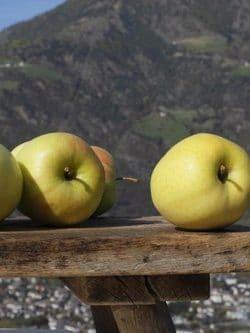 Suedtirol, Vinschgau, Naturns, Herbst 2010, Apfel, Delicious