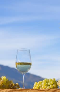 Südtirol, Naturns, Sommer-Herbst 2016, Weingut Unterortl, Juval 1B, Weinernte, Weisswein, Riesling,