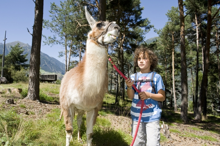 Familienwandern Gsinboden Lama