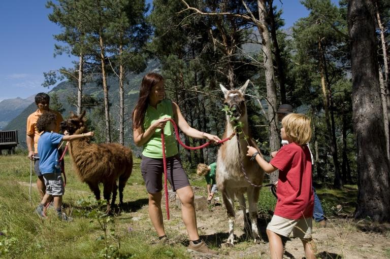 Wanderungen mit Alpakas - Familienurlaub in Meran