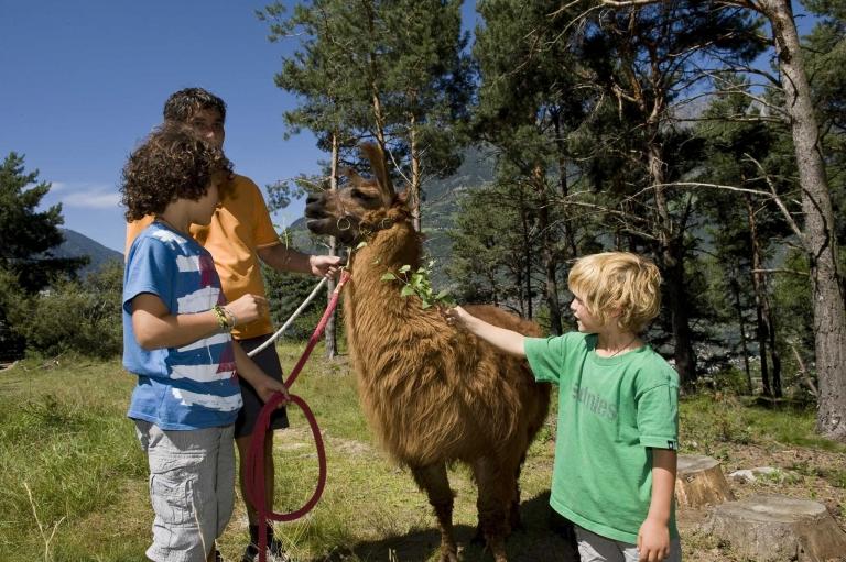 Naturns Familienwandern Alpaka - Urlaub im Lindenhof